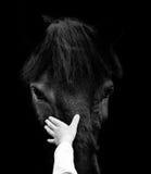 Concept : la main d'enfant est tête de cheval émouvante Photographie stock libre de droits
