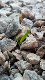 The concept of life and growth despite the difficulties. Green grass sprout makes its way through the small granite stones of the. Road. Gray cracked pebbles stock images