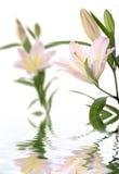 concept lilies spa στοκ φωτογραφίες με δικαίωμα ελεύθερης χρήσης