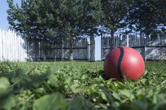 The concept of loneliness or kidnapping. A lonely red ball lies on the green grass in the courtyard against the background of a wh stock photo