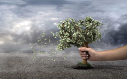 Concept of loss your money. Hand picks the money tree is taken from the earth on a grey clouds background. Loss profit. Losing your savings and managing your Royalty Free Stock Photo