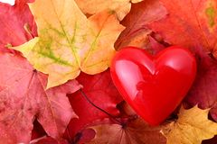 Concept of love autum Stock Photography