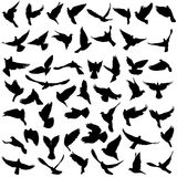 Concept of love or peace. Set silhouettes doves. Vector illustration Stock Photography