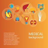 Concept of medical background. Human anatomy. Concept of medical background. Flat design icons for human anatomy, huge collection of human organs Royalty Free Stock Photos