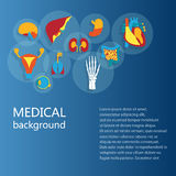 Concept of medical background. Human anatomy. Concept of medical background. Flat design icons for human anatomy, huge collection of human organs Royalty Free Stock Images