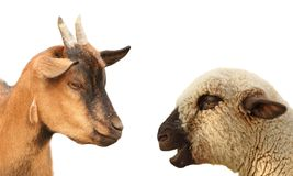 Concept met dieren het debatteren Royalty-vrije Stock Foto's
