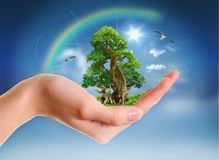 Concept Milieu Royalty-vrije Stock Foto's