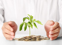 Concept of money plant growing from coins Royalty Free Stock Image