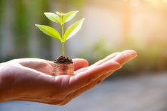 Concept of money with plant growing from coins in hand. Financial and save money concept. royalty free stock photo