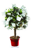 Concept, money tree on grass isolated. Photo of tree made of dollars isolated on white Stock Image