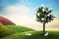 Concept, money tree on grass. Photo of tree made of dollars Stock Photography
