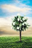 Concept, money tree on grass. Photo of tree made of dollars Royalty Free Stock Image