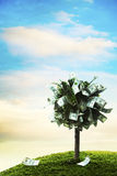 Concept, money tree on grass. Photo of tree made of dollars Stock Images