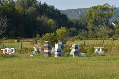 Concept multicolore de boîtes de l'apiculture d'arrière-cour Photos libres de droits