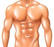 Concept musculaire de forme physique de torse d'homme d'isolement sur le vecteur blanc illustration de vecteur