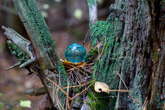 The Concept of nature, autumn forest. Crystal blue ball on a wooden old stump with leaves and moss. Royalty Free Stock Image
