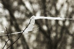 Concept - nature conservation and plastic rejection, environmental problems. a piece of plastic bag caught on a branch of an royalty free stock image