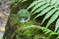 The concept of nature, green forest. Crystal ball on a wooden stump with leaves. Glass ball on a wooden stump covered with moss. Royalty Free Stock Photos