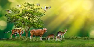 Concept Nature reserve conserve Wildlife reserve tiger Red cow Deer Global warming Food Loaf Ecology Human hands protecting the wi. Ld and wild animals tigers Royalty Free Stock Images