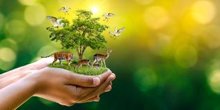 Concept Nature reserve conserve Wildlife reserve tiger Deer Global warming Food Loaf Ecology Human hands protecting the wild and w. Ild animals tigers deer Stock Images