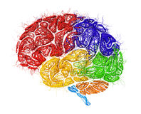 Concept of neural network. Neural network in form of brain with colored zones thinking isolated on a white background. 3d illustration Stock Photos