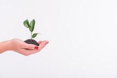 Concept of new life Stock Photography