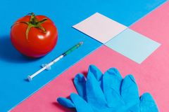 Concept of Non-natural Products, Gmo. Syringe, Sticker, Blue Gloves and Red Tomato on Pink and Blue Background, Stock Image