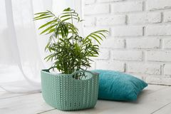 Free Concept Of Courting Domesticated Plants Royalty Free Stock Image - 108603266