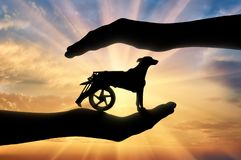 Free Concept Of Helping And Caring Animals With Disabilities Stock Photo - 109130870