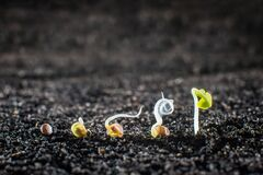 Free Concept Of Seed Germination In The Ground Stock Photos - 169080553