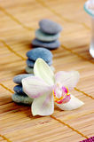 concept orchids spa στοκ φωτογραφία με δικαίωμα ελεύθερης χρήσης