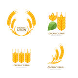 Set of organic wheat grain icons. Vector logo or label design elements. Cereals flat illustration Royalty Free Stock Photos