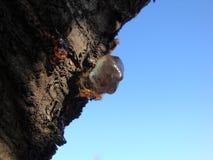 Concept organique de la vie : baisses jaunes lumineuses disjointes de goudron de pin, résine image libre de droits