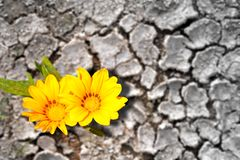 Concept of persistence. Flowers in arid land. Concept of persistence. Flowers blooming in dry land Royalty Free Stock Photo
