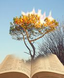 Moses at burning bush tree gods presence. Concept photo of a burning bush tree god talks to moses ideal for bible story prophecy etc royalty free stock photo