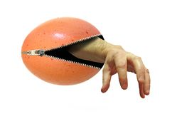 Eerie arm handemerging from inside an unzipped egg. Concept photo of an eerie arm hand emerging from an unzipped egg stock image