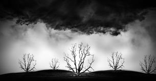 Concept picture of bad enviroment in black and white tone. Die tree - concept picture of bad enviroment in black and white tone Royalty Free Stock Photos