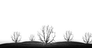 Concept picture of bad enviroment in black and white tone. Die tree isolate - concept picture of bad enviroment in black and white tone stock images