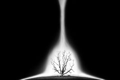 Concept picture of bad enviroment in black and white tone. Die tree with light beam - concept picture of bad enviroment in black and white tone Royalty Free Stock Photos