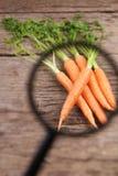 Concept plantaardige kwaliteitsanalyse Stock Foto's