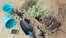 Concept plat de jardin de configuration Photographie stock libre de droits