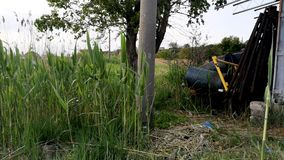 Barrels of industrial waste near the green tree and reeds. The concept of pollution of nature and storage of toxic products stock video footage