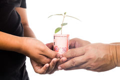 Concept of presenting plant growing from Malaysia Ringgit, symbo Royalty Free Stock Photos