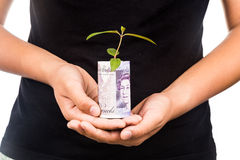 Concept of presenting plant growing Sterling Pound, symbolizing Royalty Free Stock Photos