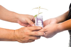 Concept of presenting plant growing Sterling Pound, symbolizing Stock Photo