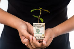 Concept of presenting plant growing from USD currency, symbolizi Stock Photography
