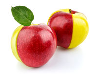 Concept of red and yellow apple fruit with green Royalty Free Stock Photography