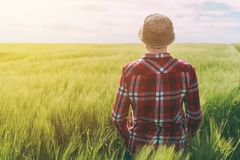 Concept of responsible farming, female farmer in cereal crops fi. Eld, woman agronomist looking over the wheat field to the horizon on a windy day and planning Royalty Free Stock Image