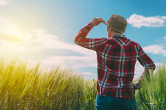 Concept of responsible farming, female farmer in cereal crops fi Royalty Free Stock Photo