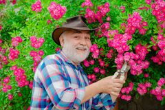 Concept of a retirement age. Bearded Senior gardener in an urban garden. Happy gardener with spring flowers. Springtime. On the ranch. Grandfather in beautiful royalty free stock photo